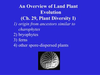 An Overview of Land Plant Evolution (Ch. 29, Plant Diversity I)