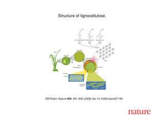 EM Rubin Nature 454 , 841-845 (2008) doi:10.1038/nature07190