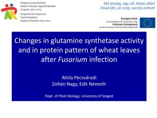 Glutamine synthetase GS, EC 6.3.1.2