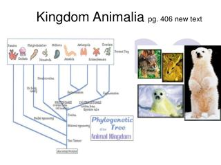 Kingdom Animalia pg. 406 new text