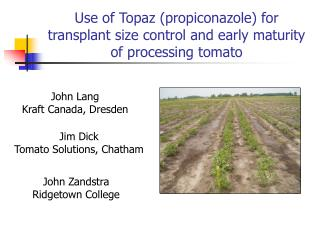Use of Topaz (propiconazole) for transplant size control and early maturity of processing tomato