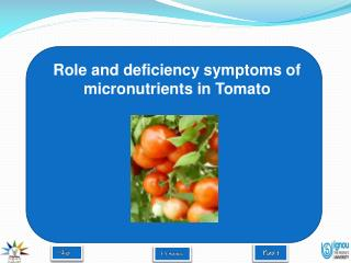 Role and deficiency symptoms of micronutrients in Tomato