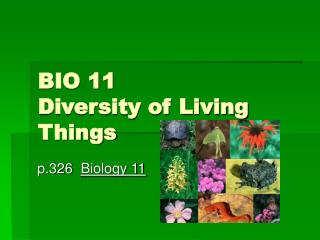 BIO 11  Diversity of Living Things