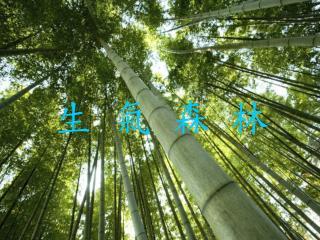 生 氣 森 林