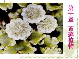 第十章 苔藓植物