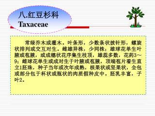 八 . 红豆杉科 Taxaceae