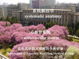 系统解剖学    systematic anatomy