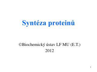 Syntéza proteinů