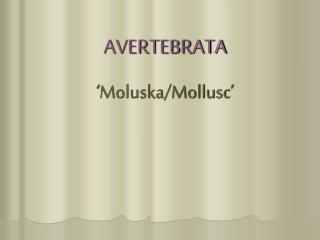 AVERTEBRATA ' Moluska /Mollusc'