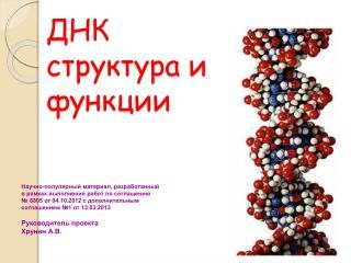 ДНК структура и функции