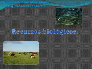 Agrupamento de escolas de Aveiro e.b.23 João Afonso de Aveiro.