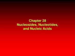 Chapter 28 Nucleosides, Nucleotides, and Nucleic Acids
