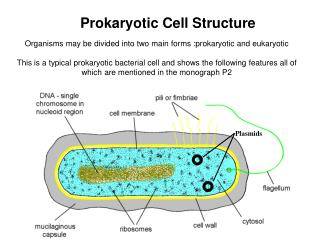 Organisms may be divided into two main forms :prokaryotic and eukaryotic