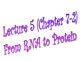 Lecture 5 (Chapter 7-2) From RNA to Protein
