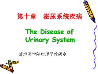 第十章  泌尿系统疾病 The Disease of     Urinary System 蚌埠医学院病理学教研室
