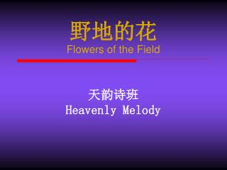 野地的花 Flowers of the Field