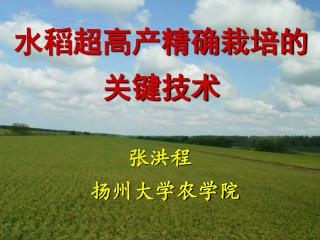 水稻超高产精确栽培的关键技术