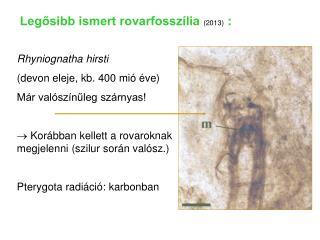Rhyniognatha hirsti (devon eleje, kb. 400 mió éve) Már valószínűleg szárnyas!