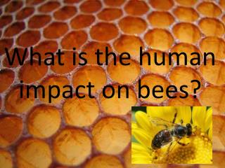 What is the human impact on bees?