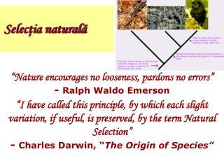 Selecţia naturală