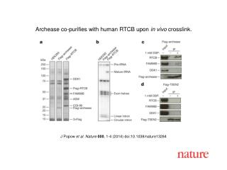 J Popow et al. Nature 000 , 1-4 (2014) doi:10.1038/nature13284