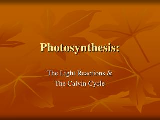 Photosynthesis: