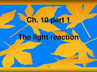 Ch. 10 part 1 The light reaction
