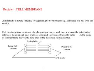 Review: CELL MEMBRANE