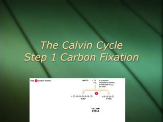 The Calvin Cycle  Step 1 Carbon Fixation