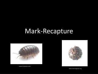 Mark-Recapture