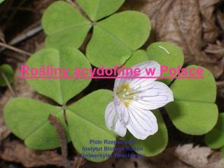 Rośliny acydofilne w Polsce