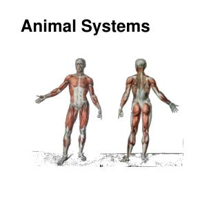 Animal Systems