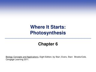 Where It Starts: Photosynthesis
