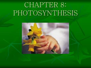 CHAPTER 8: PHOTOSYNTHESIS