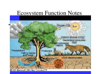 Ecosystem Function Notes