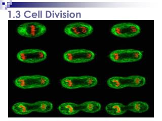 1.3 Cell Division