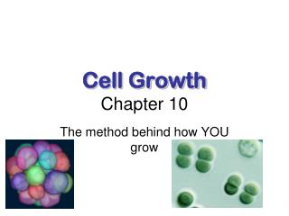 Cell Growth Chapter 10