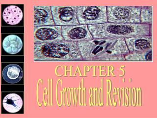 Cell Growth and Revision