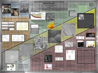 Biomimetics: Learning From Nature for Novel Material Concepts