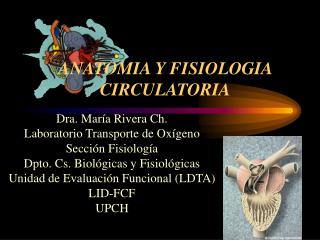 ANATOMIA Y FISIOLOGIA  CIRCULATORIA
