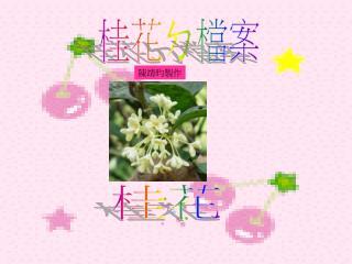 桂花 ㄉ 檔案