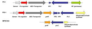 Sensor Fis regulator ABC-Transporter HP1 PLC