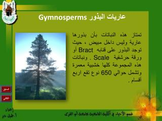 عاريات البذور Gymnosperms