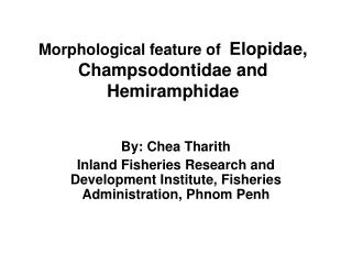 Morphological feature of Elopidae, Champsodontidae and Hemiramphidae