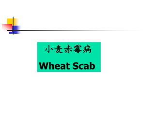 小麦赤霉病 Wheat Scab