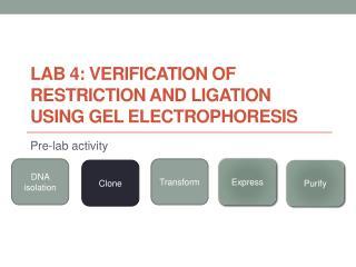 Lab 4: VERIFICATION OF RESTRICTION AND LIGATION USING GEL ELECTROPHORESIS