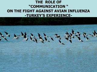 "THE ROLE OF ""COMMUNICATION "" ON THE FIGHT AGAINST A V I AN INFLUENZA -TURKEY 'S EXPERIENCE-"
