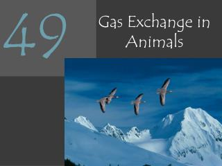 Gas Exchange in Animals