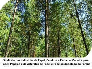 Sindicato das Indústrias de Papel, Celulose e Pasta de Madeira para