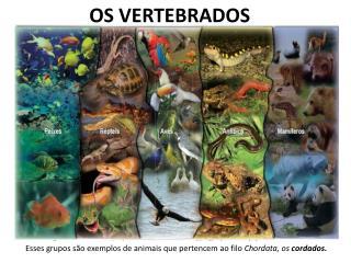 OS VERTEBRADOS